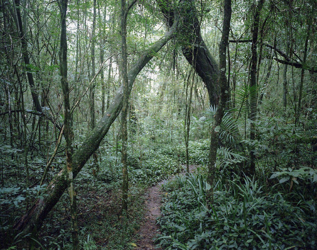 Jungle de Paraná (Brésil)
