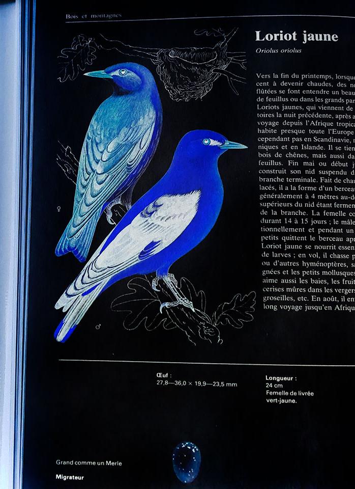 mon_oiseau_bleu